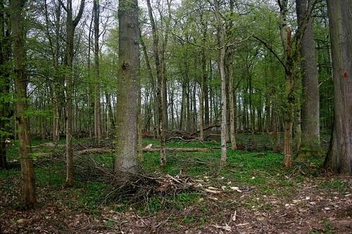 Beispiel für eine Forstmaßnahme: Unbewirtschaftete Waldfläche