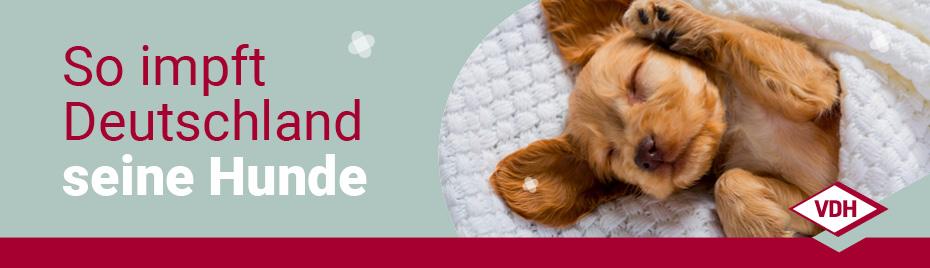 Parasitenschutz beim Hund mithilfe von Arzneimitteln (Antiparasitika): Wünsche, Sorgen und Routinen von Hundehaltern