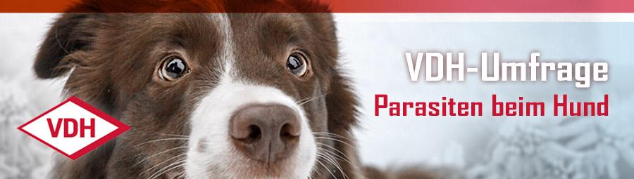 Umfrage zum Zeckenschutz beim Hund