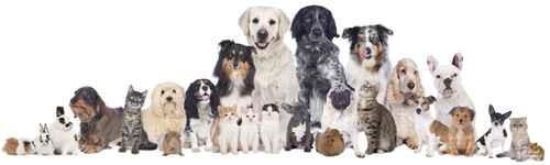 TAG der OFFENEN TÜR in der Tierarztpraxis